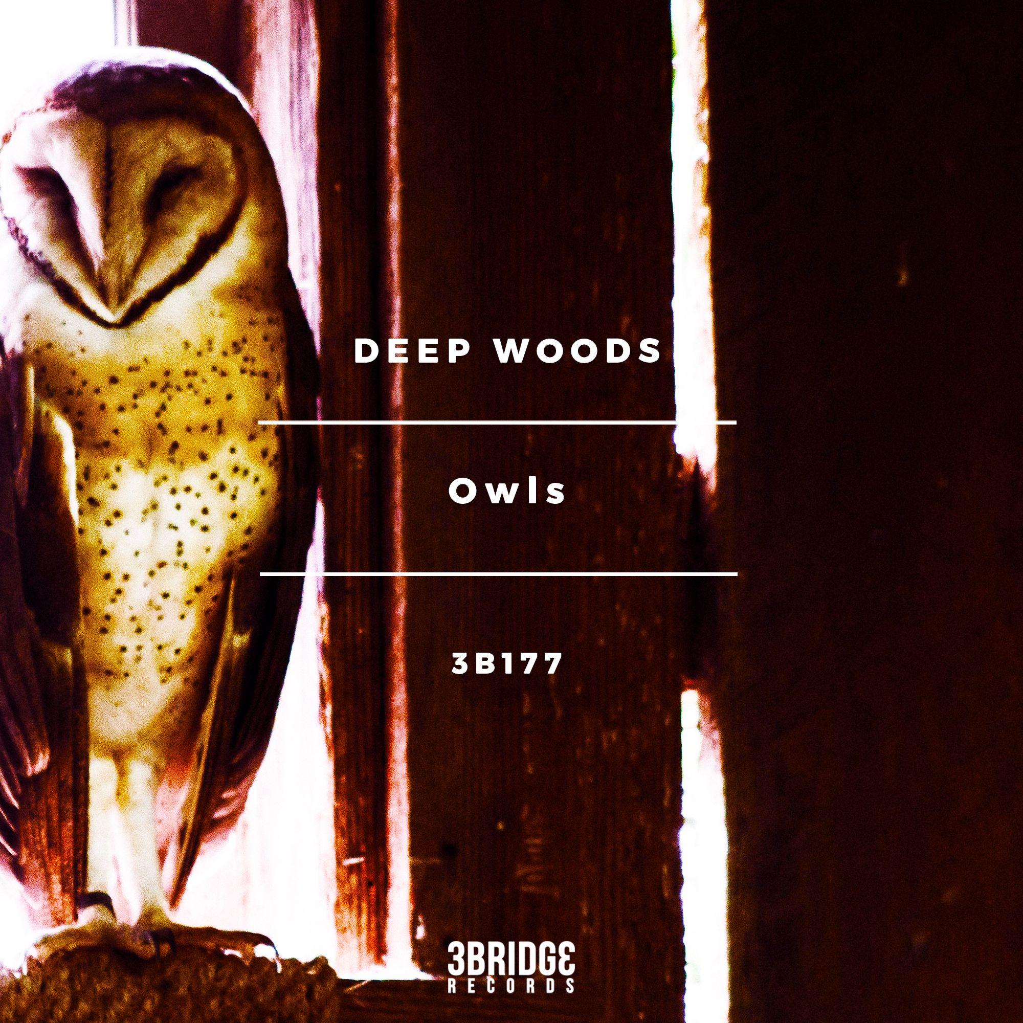 deepwoodsowls.jpg