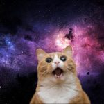 kitte.jpg